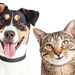Dog & Cat Grooming Services - New Cumberland PA