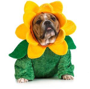 dog-in-flower-costume-b