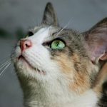 Help Local Cats & Dogs With Donations