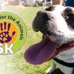 20th ANNUAL 5K RUN/WALK FOR THE ANIMALS