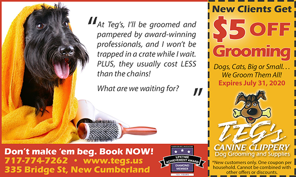 Coupon for Dog & Cat Grooming