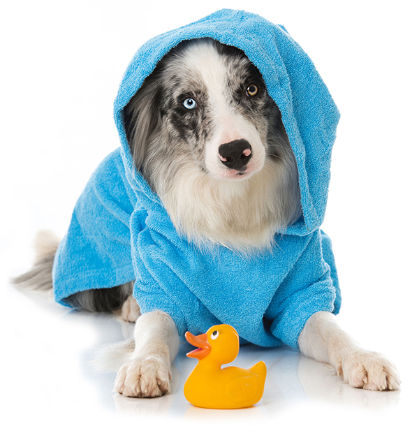 Dog Bath at Teg's Canine Clippery - New Cumberland PA